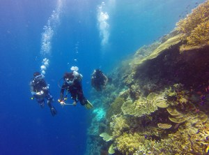 Maluku coral reef diving, Indonesia