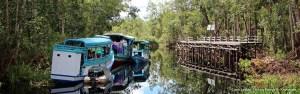 Klotoks at Camp Leakey, Tanjung Puting, Kalimantan