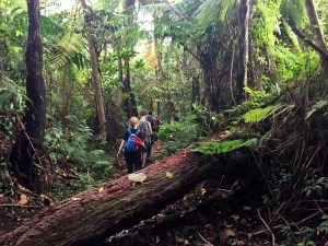 Trekking on the lower flanks of Mt Tambora