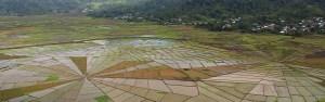 Linkgo spider rice fields near Cancar Village, Manggarai region, central Flores