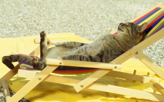 cat-sunbath-chill