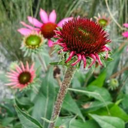 Botanic garden, Christchurch