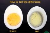 The GMO Egg vs. Organic Egg Comparison Debunked