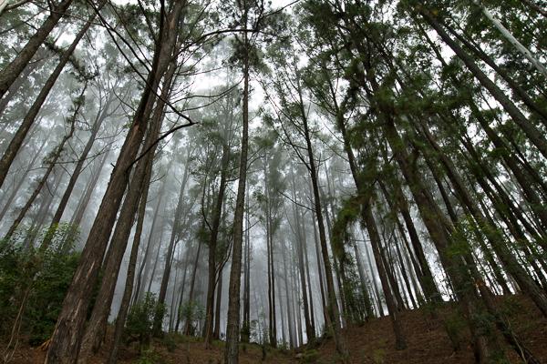 Thangamale Forest Reserve. Credit: Deirdre Leowinata