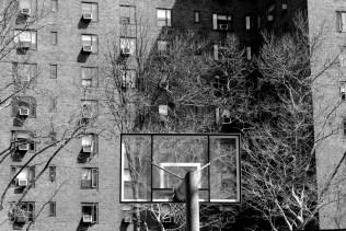 NYC355