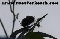 RHFishingSpider2(Web)(RH)