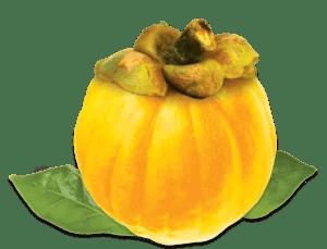 garcinia-cambogia-yellow-fruit1