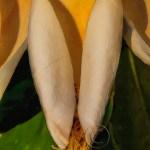 usa-sc-magnolia-vertical copy