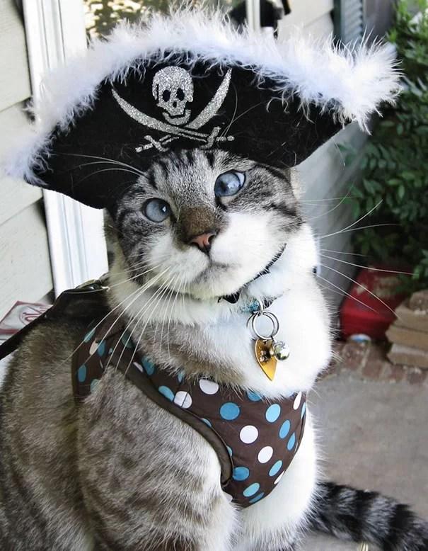 Gatos preparados para o Halloween