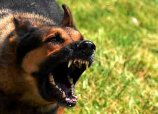 http://upload.wikimedia.org/wikipedia/commons/e/e7/Mad_dog.jpg