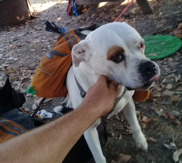 Adventure pupper or homeless doggo?