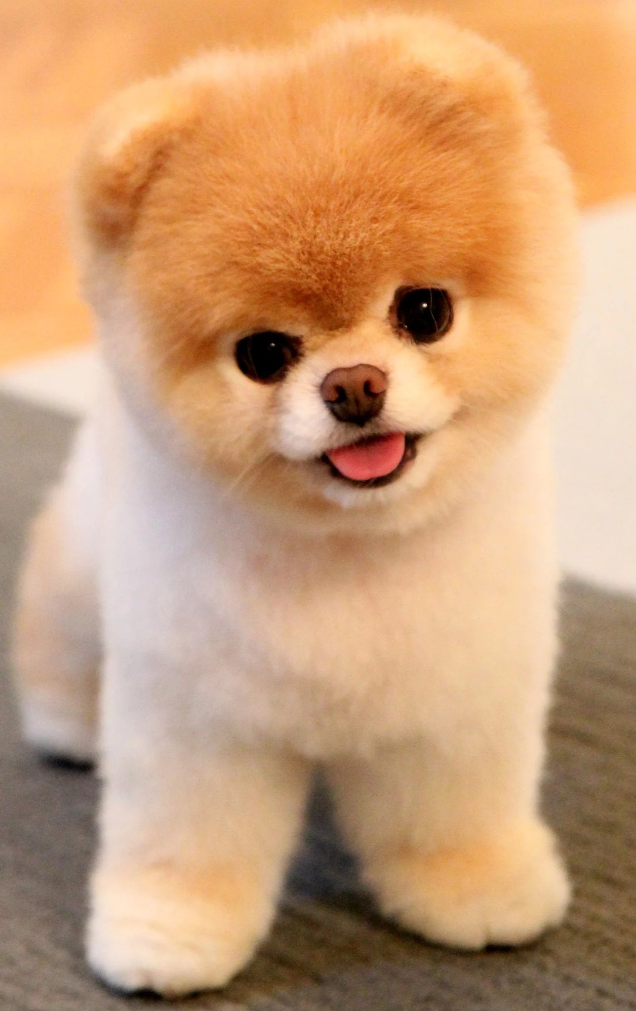 Snazzy Dogs That Look Like Stuffed Animals Rover Blog Why Are Dogs S So Why Are Dogs So Yahoo bark post Why Are Dogs So Cute