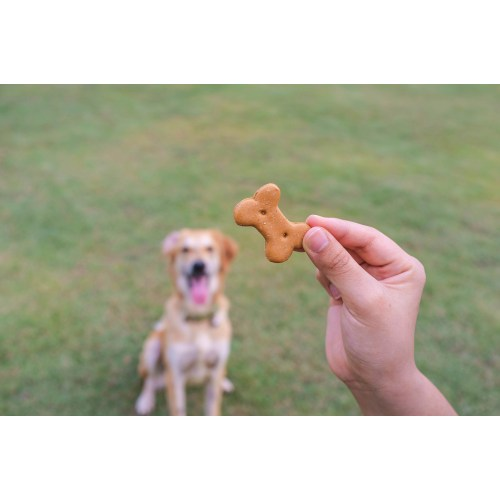 Medium Crop Of Dog Training Treats