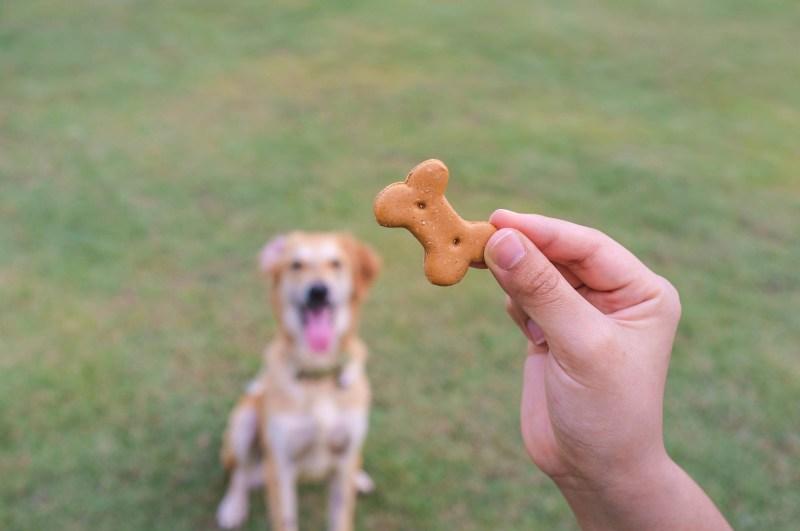 Large Of Dog Training Treats
