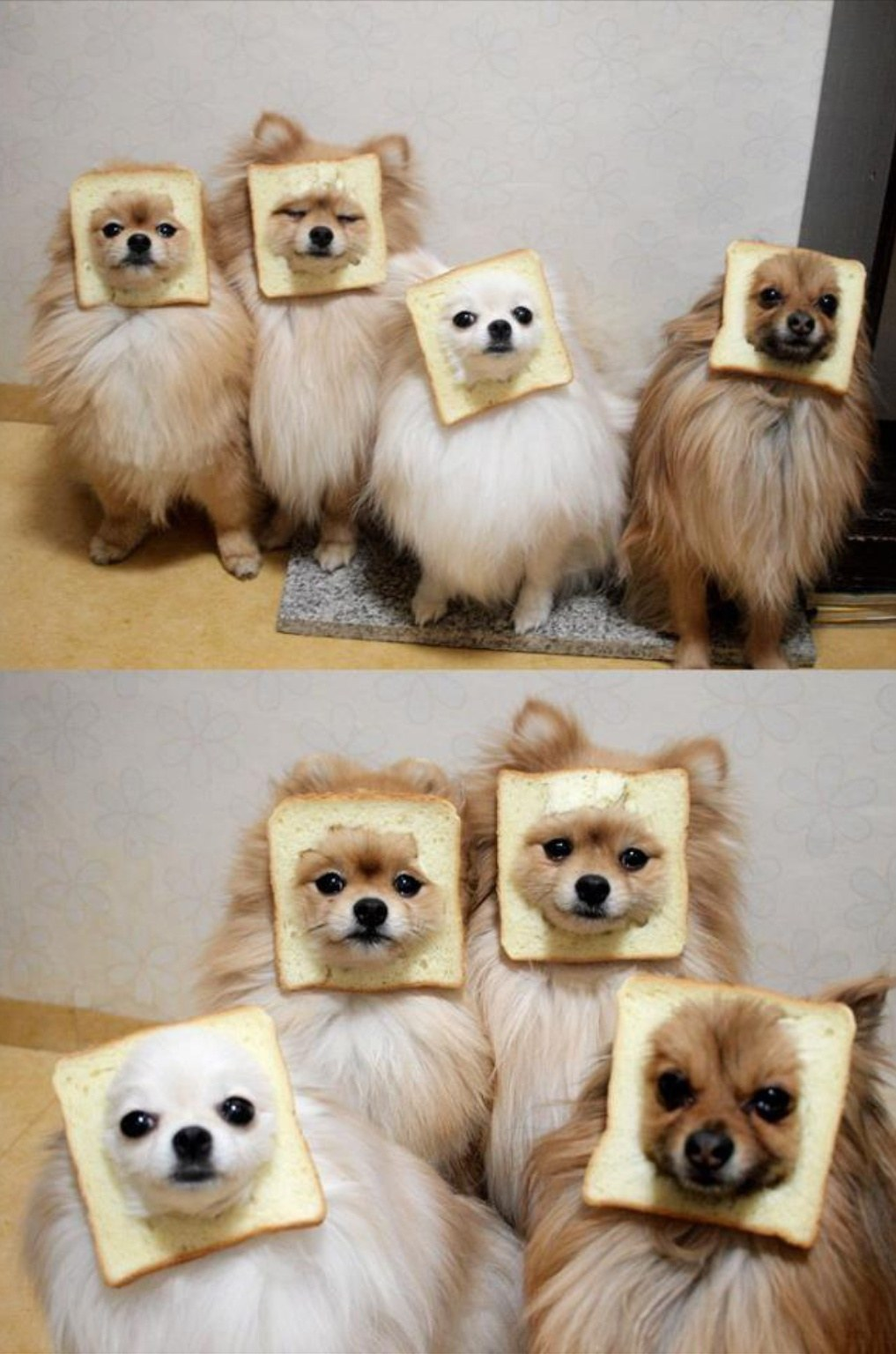 Particular Hindi Adults Ny Dog Jokes Pomeranian Bread Squad Puppy Gangs We Want To Join Right Now Dog People By Ny Dog Jokes bark post Funny Dog Jokes