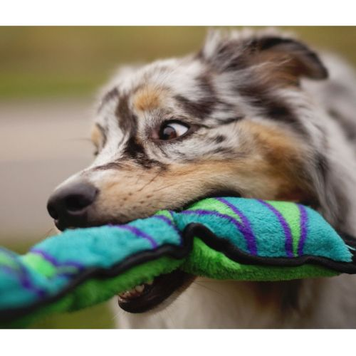 Medium Crop Of Why Do Dogs Like Squeaky Toys