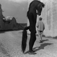 Sad Creepy Horse-Man from Testament of Orpheus (1960) by Jean Cocteau