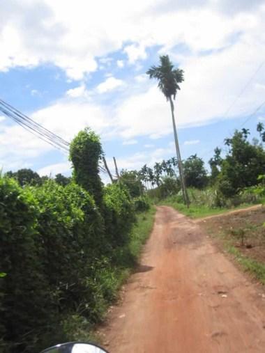 Kampot134