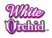 White-Orchid SLOT
