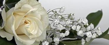 Meaning And Benefits Of White Roses