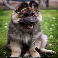 Small Of Dogs That Look Like Teddy Bears