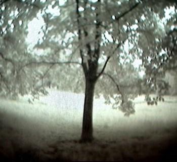 Obs-Unc_treeintheforest-ophelia2
