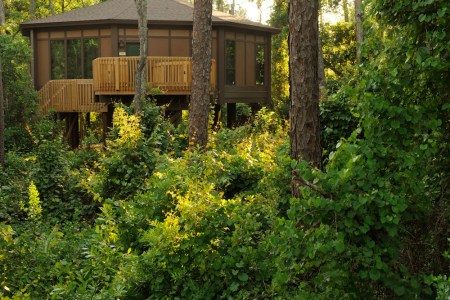 disney tree house villas