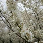 Ready For Cherry Blossom Run in Washington, D.C.