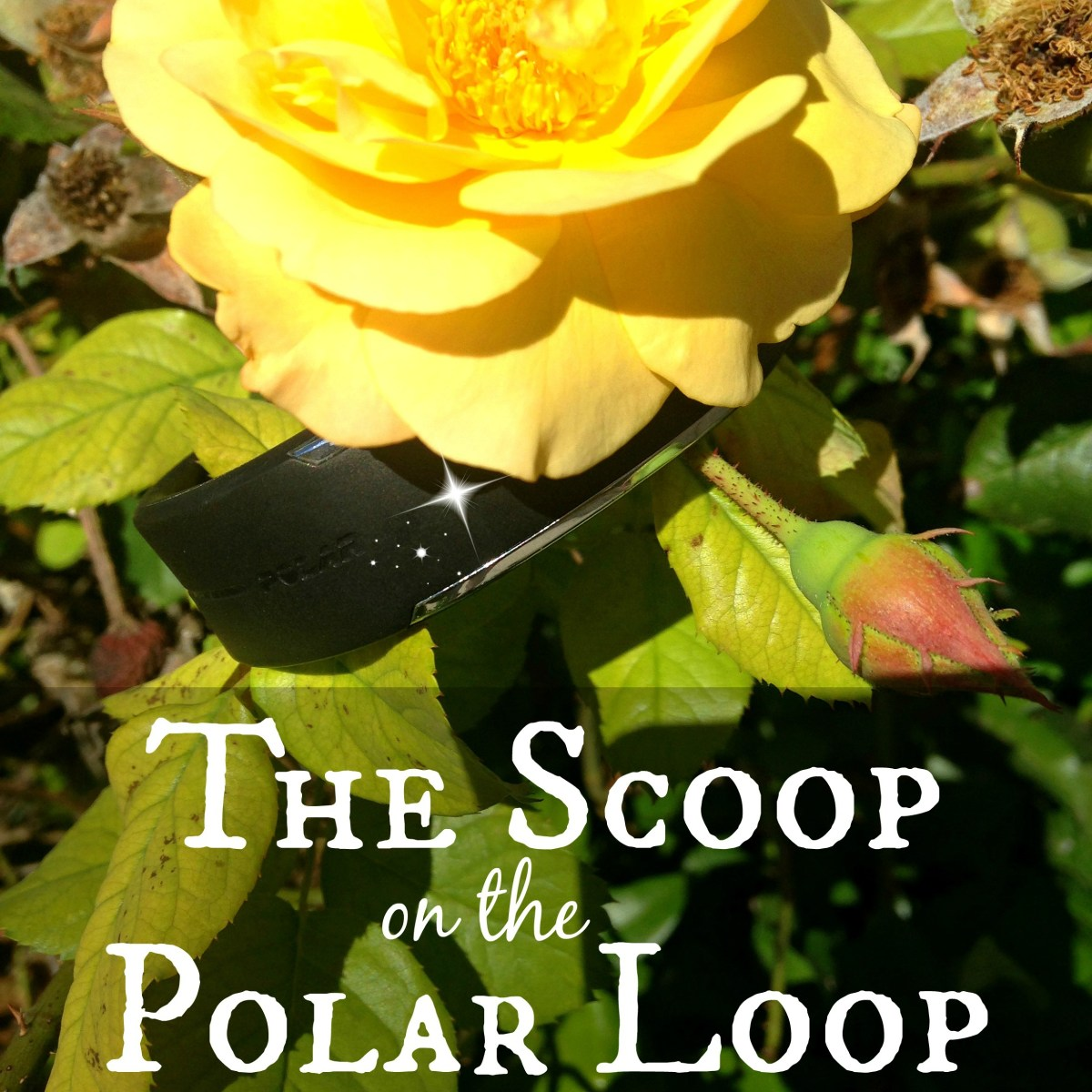 The Scoop on the Polar Loop