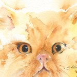 Watercolour painting. SPA 013 Ginger. Artist: Seonaid Parnell
