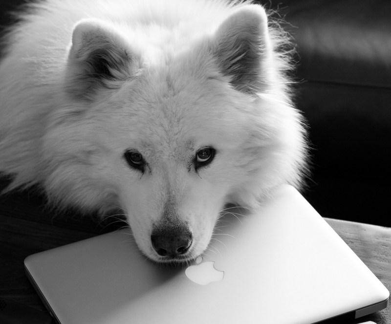 Large Of White Dog Names