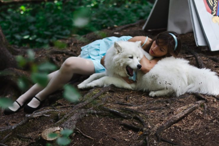 samoyed girl photo