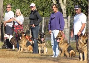 dogs training 300x215 Guard Dog Training