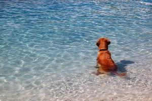 miserable dog 300x199 Scuba Diving Dog