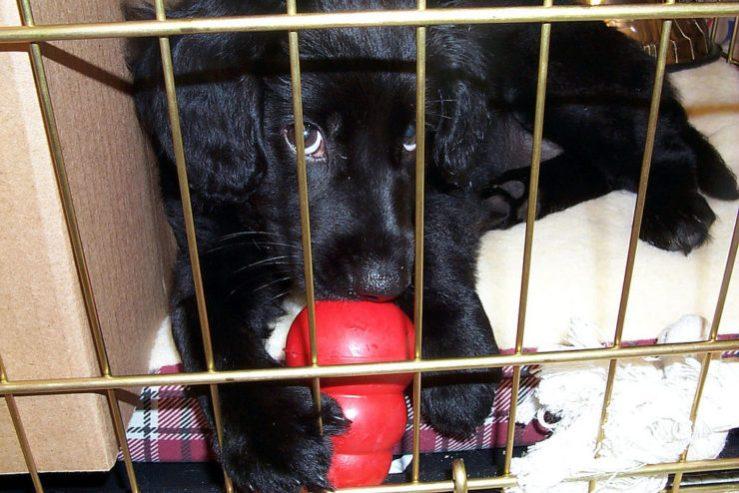 puppy crate photo