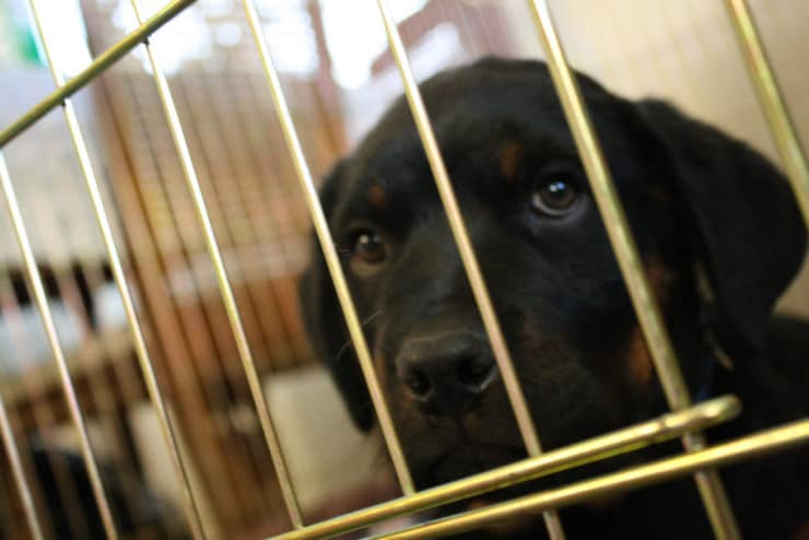 rottweiler cage photo