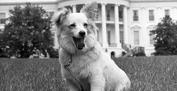 kennedys dog