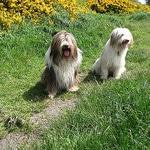dog summer- walk