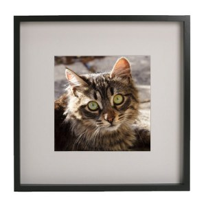 Framed Cat