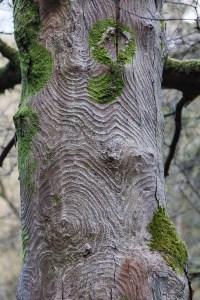 Pattern On A Tree Trunk