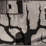 Tree Shadow #1