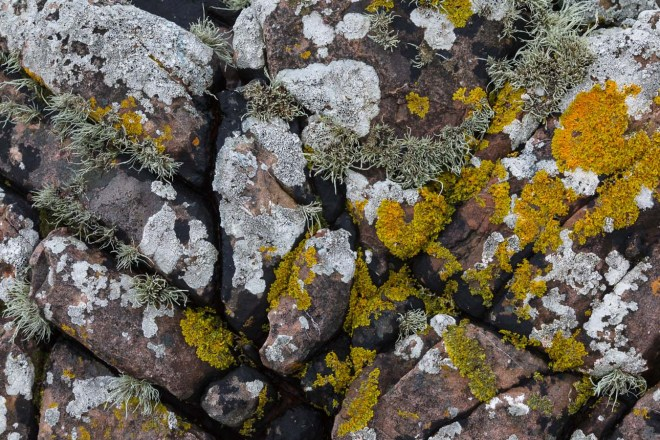 Lichen Covered Rock #1
