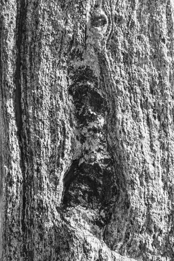 Callanish Stone Texture #2