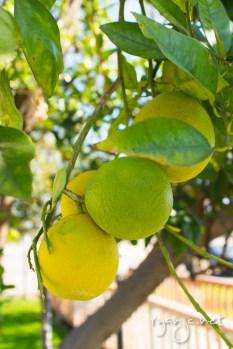Citrus in Phoenix