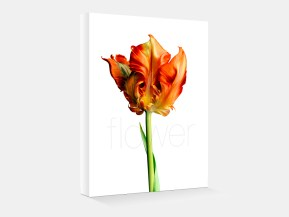 flower_featured