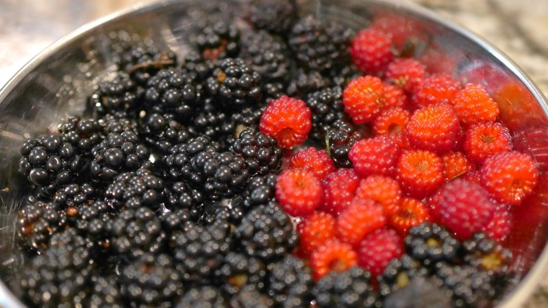 Large Of Mulberry Vs Blackberry