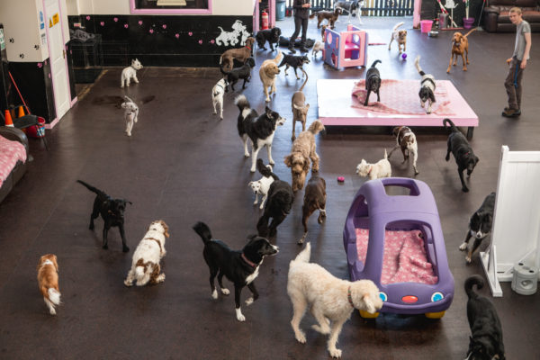 How to open a Dog Day Care in the UK? with Safe Paws