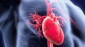 160826184616_about_your_heart_and_blood_640x360_istock_nocredit