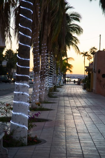 Palm Trees lit up on the Malecon