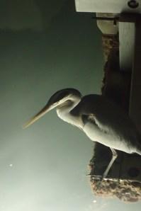 Fishing by Dock Light